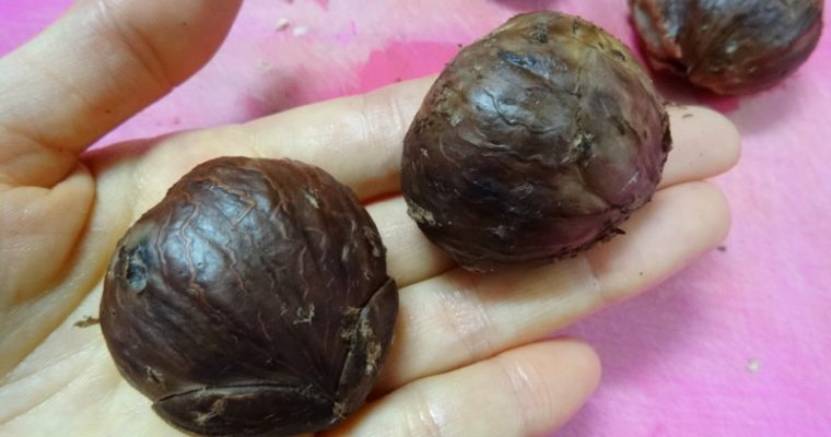 Chestnuts after boiled