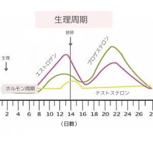 生理周期の図